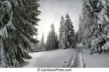 Snowy fir trees and blue sky - Mountain trail in snowy fir...