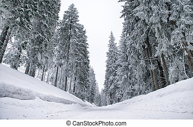 Snowy road in forest - Empty snowy road in winter forest