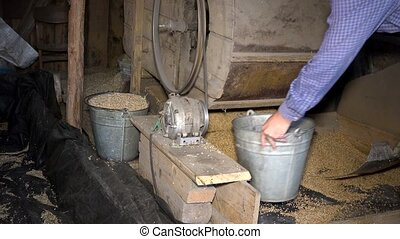 man with shovel and bucket work near agricultural sifting machine. closeup