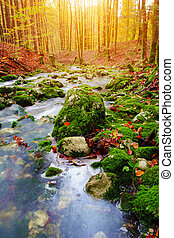 Mountain creek in the autumn forest in Triglav national park...