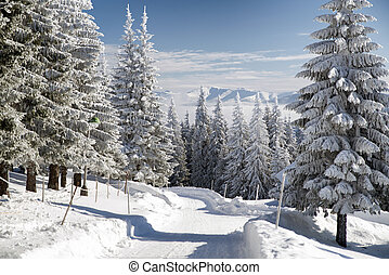 Snowy fir trees and blue sky in beautiful winter forest....