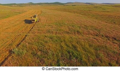 AERIAL VIEW. Combine Machine Reaping Golden Field - AERIAL...