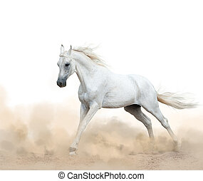 white arabian stallion running in the dust over a white...