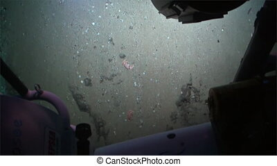 Underwater seabed view from submarine Pacific Ocean Cocos Island Costa Rica.