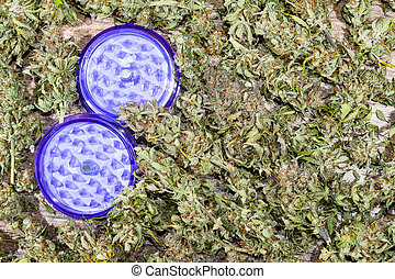 Purple grinder with cannabis buds - Open purple grinder with...