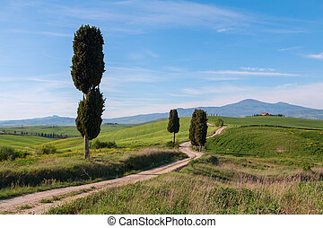 Typical Tuscany landscape and road , green hills springtime...