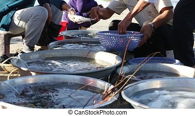 Selling fresh catch seafood - The wife of a Vietnamese...