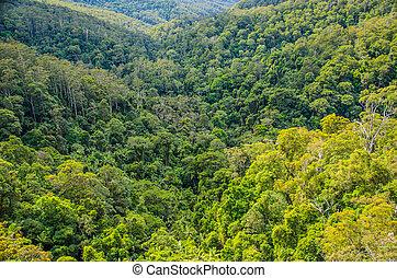 Springbrook National Park, Australien - Wahrzeichen des...