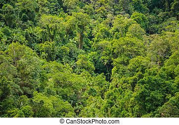 Regenwald im Springbrook National Park, Australien - Üppiger...