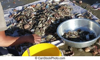 Vietnamese fishermen sorts fresh catch seafood - The hands...
