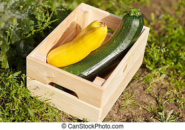 squashes in wooden box at summer garden