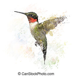 Ruby Throated Hummingbird Watercolor - Digital Painting of...