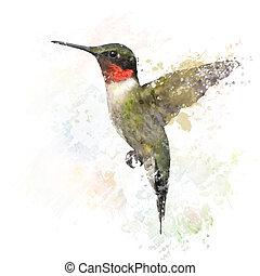 Ruby Throated Hummingbird Watercolor - Digital Painting of...