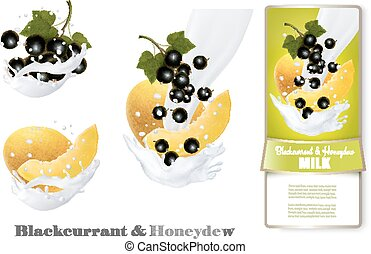 Blackcurrant and honeydew melon in milk splashes. Vector.