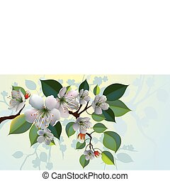 vector apple blossoms - a branch with beautiful apple...
