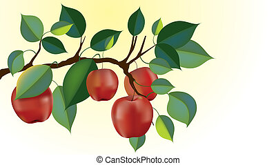 red delicious apple branch vector - red delicious apple...