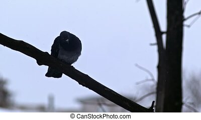 Bird is Sitting on a Bare Branches Tree, Winter, Cold...