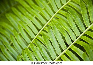 Fern - Close up of fern leaves