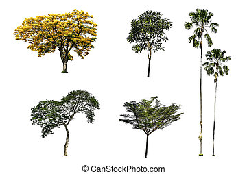 Collection of tree isolated on white background - Collection...