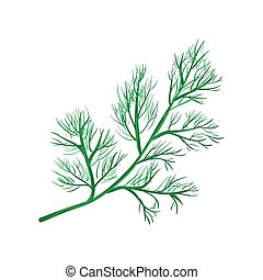 Dill branch isolated on white.Annual herb in celery family....