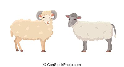 Vector set Cute Sheep and Ram isolated retro illustration....