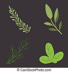 Aromatic herbs set. Fresh  and spices . Vector illustration.