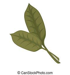 Common sorrel or garden sorrel leaves isolated on white...