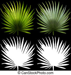 Palms leaves. - Palms leaves with alpha channels on a black...