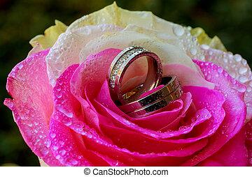 wedding rings rose taken closeup with water drops - Set of...