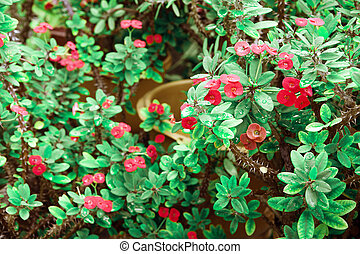 green fresh plant with red flowers