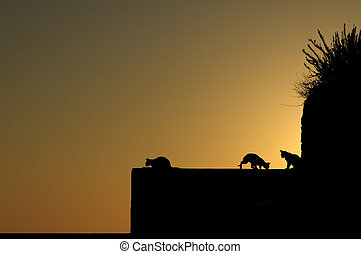 Cats silhouette and sunrise - Cats silhouette on a wall in...