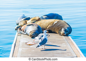 sea lions and seagulls on a wooden pier in Oceanside,...