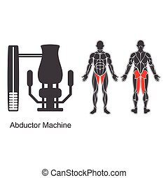 Gym abductor machine - Gym machine and human muscles...