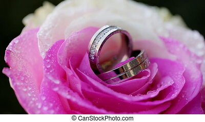wedding rings rose taken closeup with water drops - Set of...