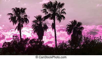 black and pink sunset - palm silhouette in a pink sunset