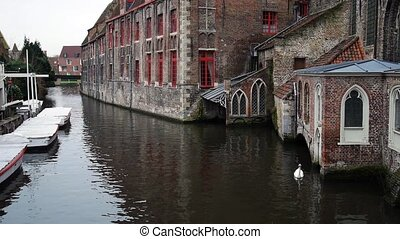 Swan swimming on the river in the Bruges, Belgium