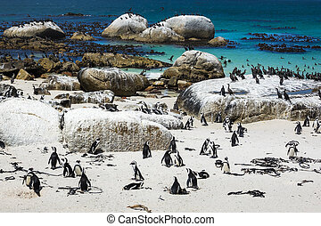 African penguins at Boulders Beach, South Africa