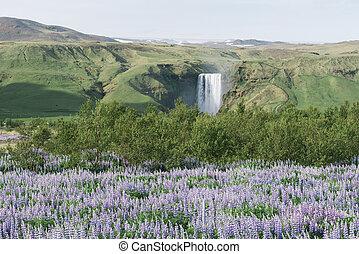 Landscape with Skogafoss waterfall, Iceland - Skogafoss...