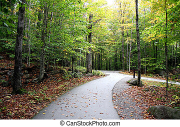 Autumn forest - A road in forest and the trees at fall time