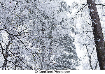 Snow Day - Snow falling on a patch of trees in a hazy,...