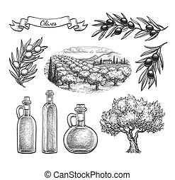 Hand drawn olive set. - Olive set. Hand drawn vector...