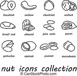 nuez,  vector, Colección, iconos