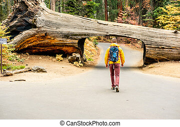 Tourist with backpack hiking in Sequoia National Park....