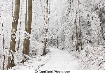 Forest path in winter scenery.