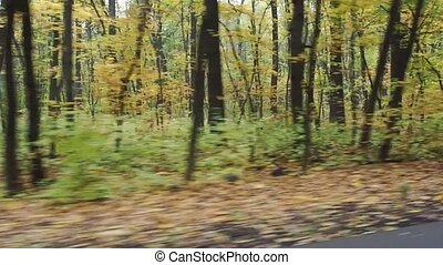 Video footage of driving through the colorful autumn forest...