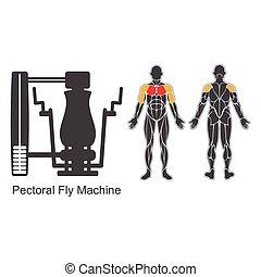 Gym pectoral fly machine - Gym machine and human muscles...
