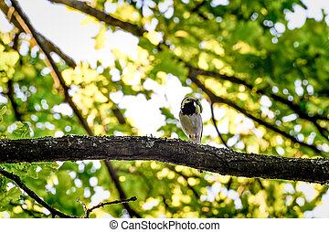 Wagtail sitting on a tree branch.
