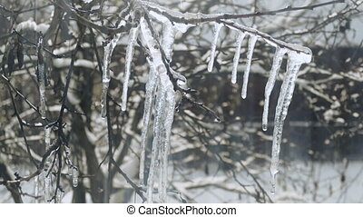 Melting icicles in spring - Melting icicles on a frozen...