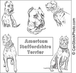 Freehand sketch illustration of American Pit Bull Terrier, -...