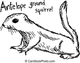 Antelope ground squirrel - vector illustration sketch hand drawn with black lines, isolated on white background